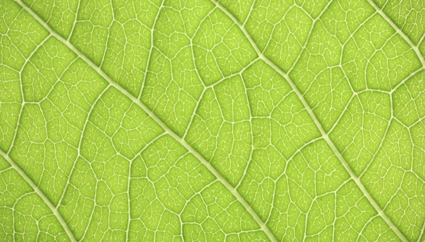 A  close-up of the veins of a green leaf.