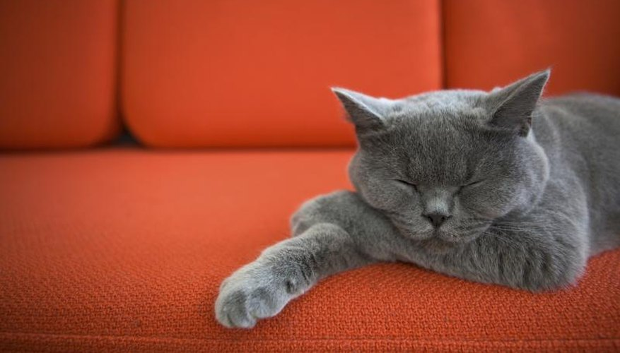 Grey cat sleeping on red sofa.