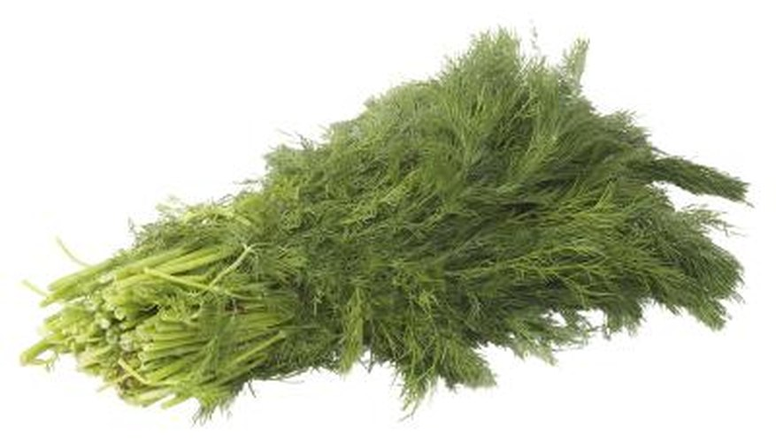 Fresh dill has a number of cooking uses.