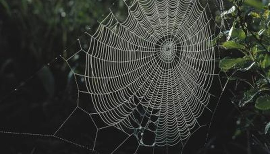 While beautiful in the garden perhaps, webs are usually not welcome in your home.