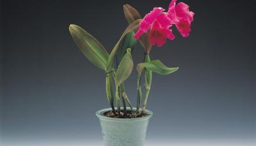 A soil-less mix for orchids may consist of  bark and moss.