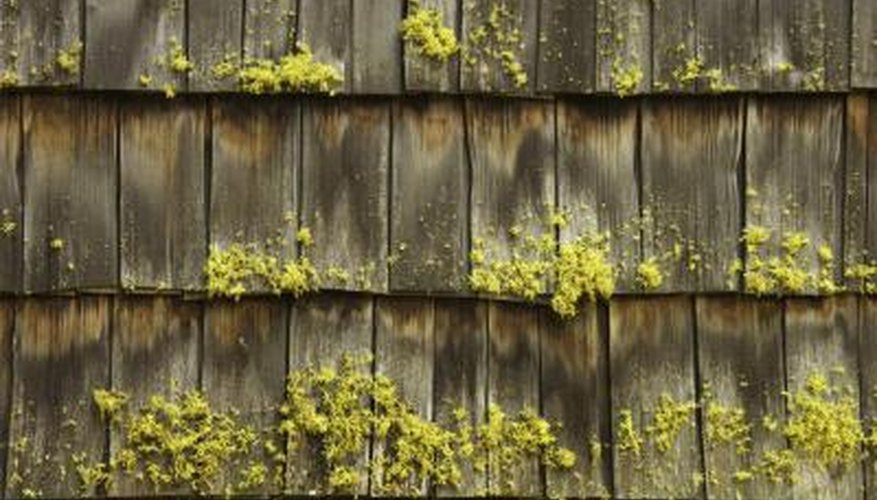 Wood roofing materials can be susceptible to moss growth.
