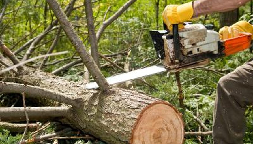 Larger trimmed branches may be pricier to dispose of.