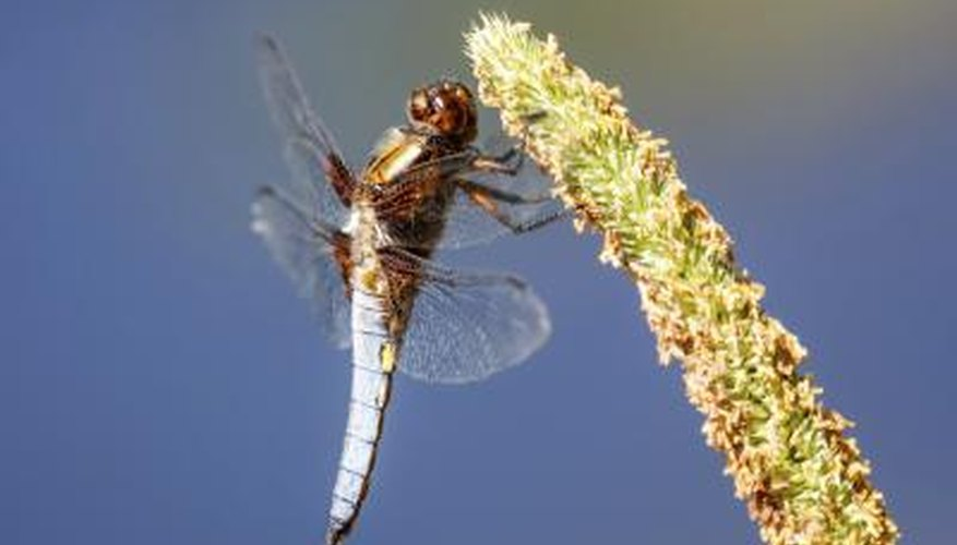 Reeds and lilies attract dragonflies.