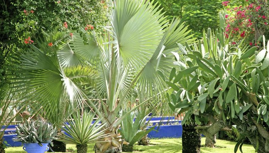 A variety of palms, plants and flowering shrubs filling a lush tropical garden.