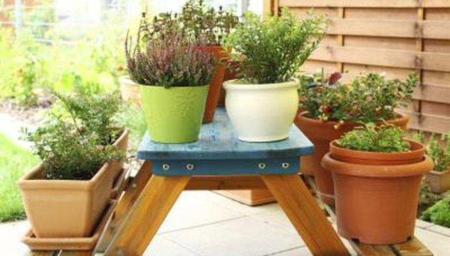 Compact plants grow best in self-watering planters.