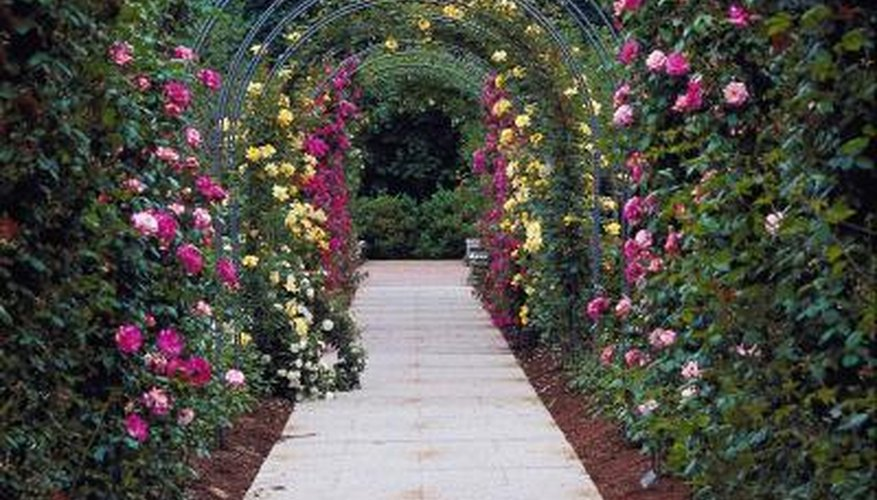 Roses climbing over an arbor walk are colorful and fragrant.
