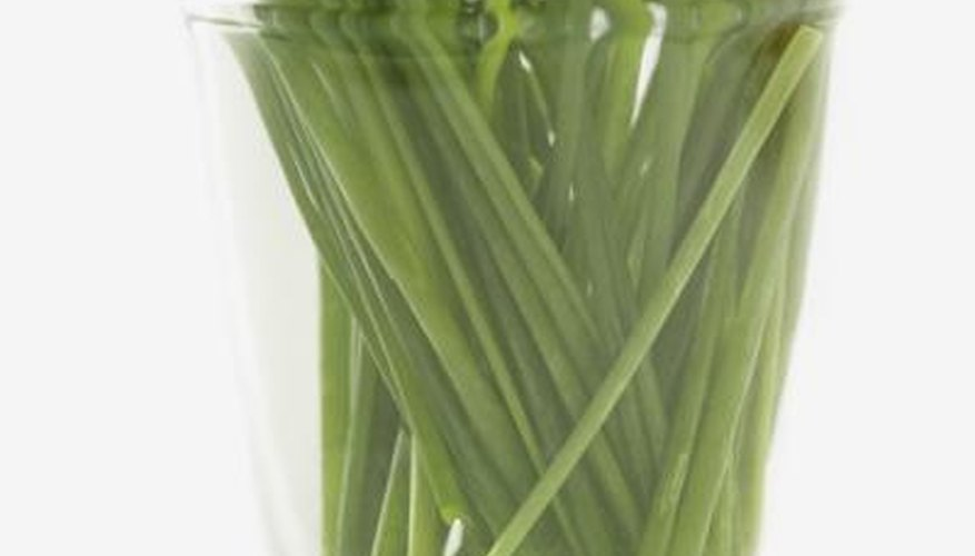 Wild onions have hollow, glossy stems that herbicides do not penetrate easily.