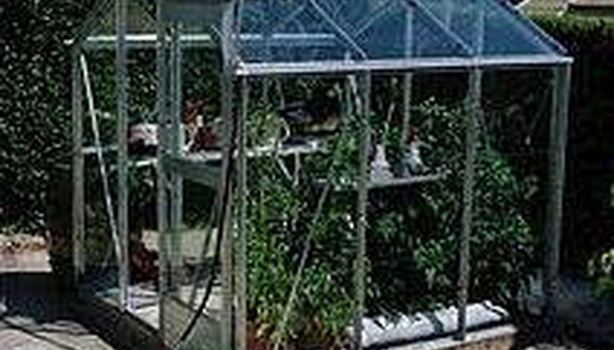 Can Vegetables Grow Year Round In The Greenhouse