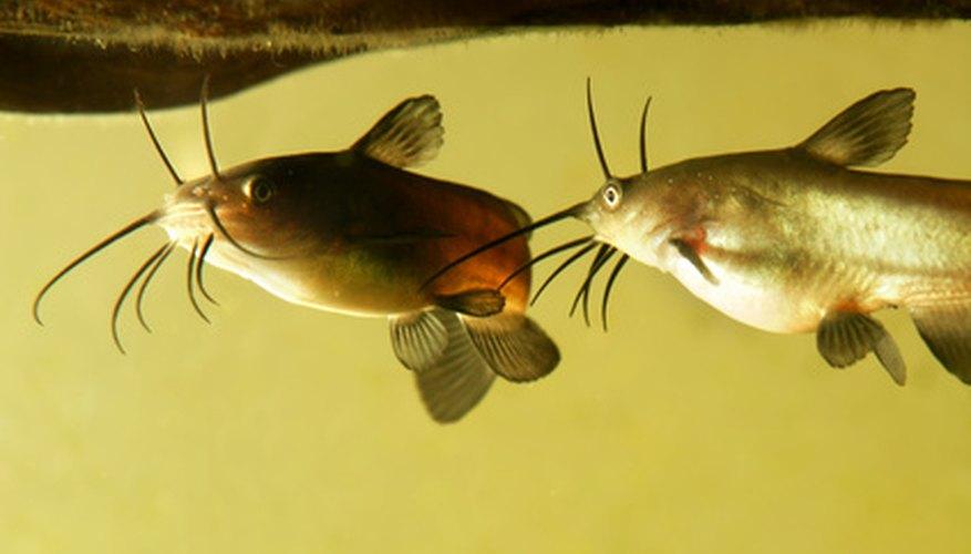 Catfish Fishing in the Spring