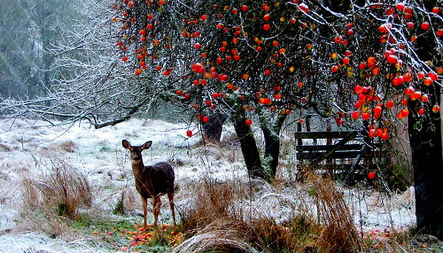 A deer in winter