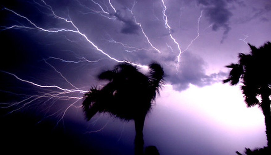 Lightning can cause damage to Washington palms because of their height.
