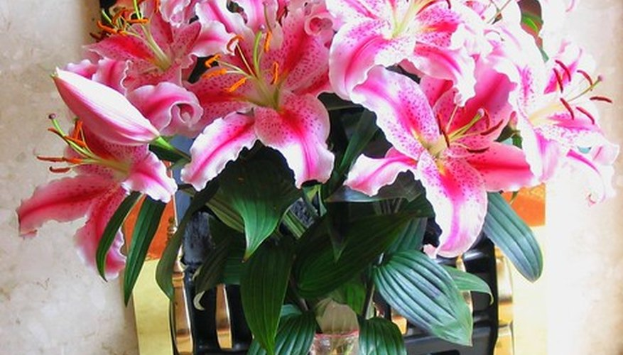 Stargazer lilies make beautiful arrangements.