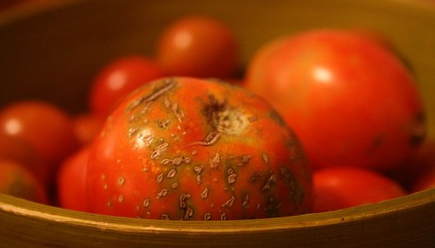 Tomatoes Are Susceptible to Numerous Diseases