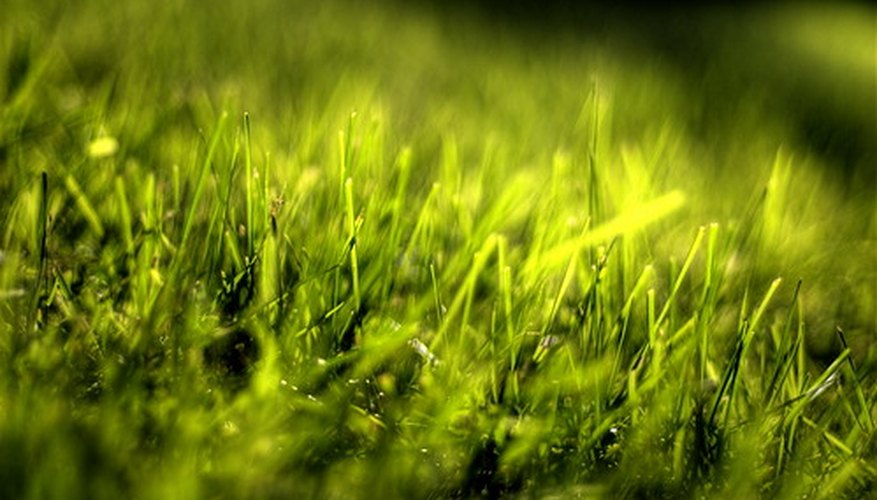 Your lawn can stay healthier and greener with regular aeration.
