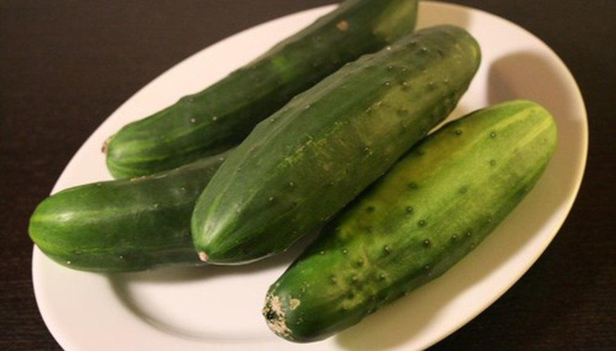 The Romans used the first  greenhouses to grow Cucumbers.