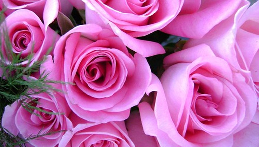 Symbolic meanings of the color of roses garden guides pink roses say mightylinksfo