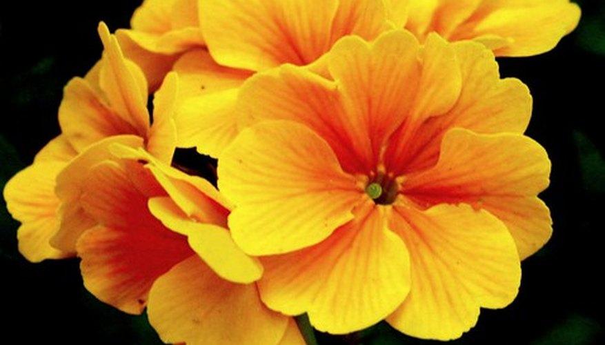 Un pequeño ramo de flores es un regalo de buen gusto.
