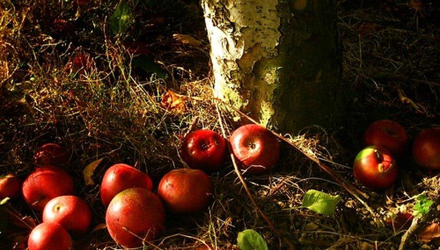 La teoría de la manzana podrida.