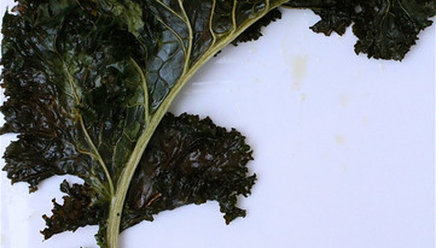 Kale, a winter vegetable that grows well in Georgia.