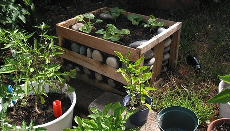 Raised beds increase fruit production.