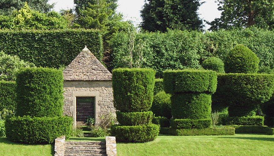 Juniper topiary can be shaped into a variety of topiary stypes