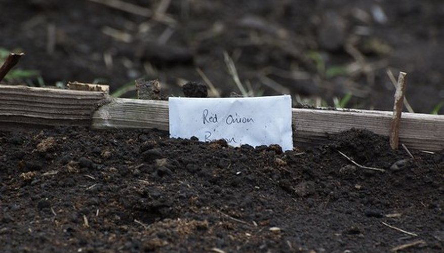 Prepared garden soil containing vegetable seeds