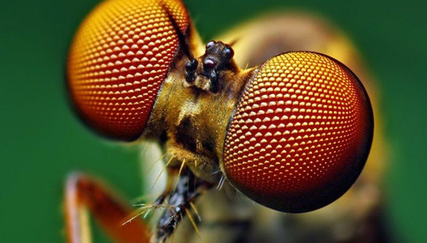 Cresas: las larvas de mosca.