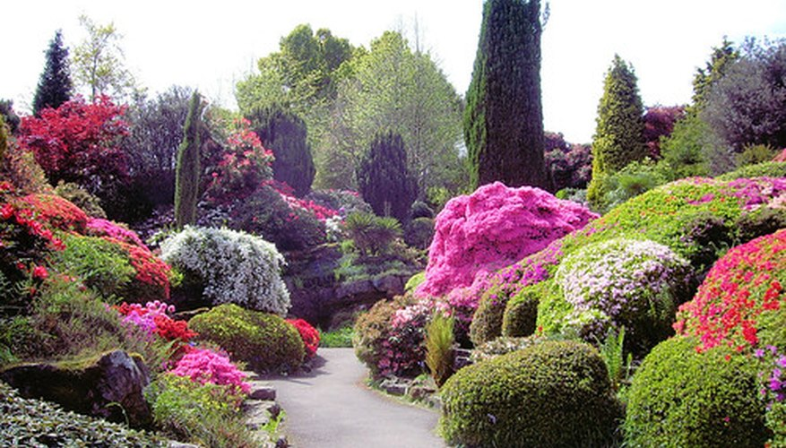 Azaleas Growing in a Landscape