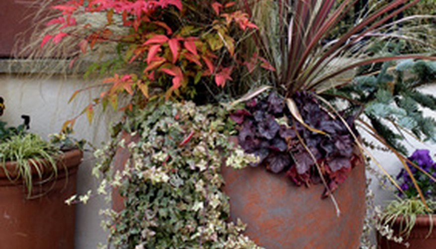 A selection of low maintenance container plants