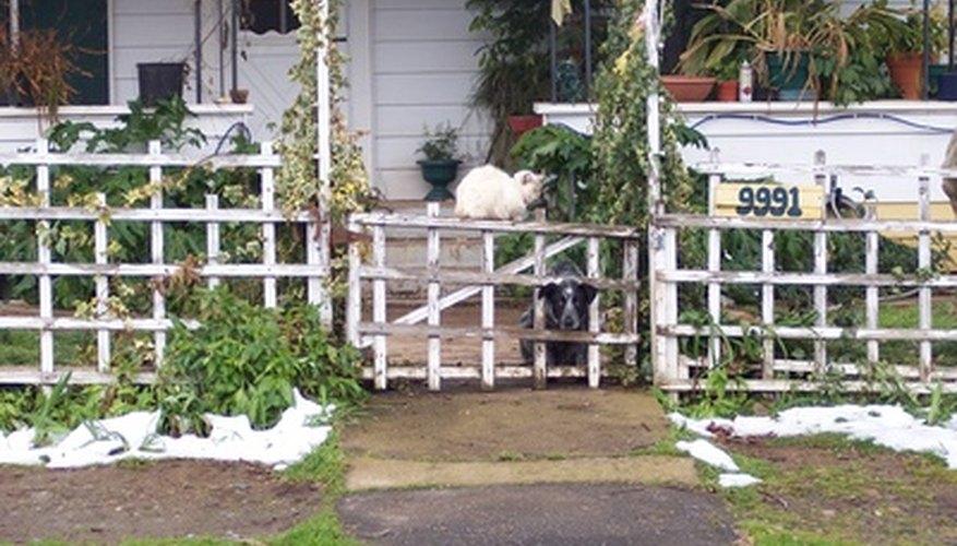 Los dueños de mascotas de bajos ingresos son elegibles para una variedad de programas de ayuda a las mascotas.