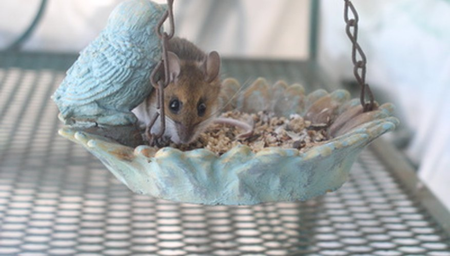 Mouse in Birdfeeder