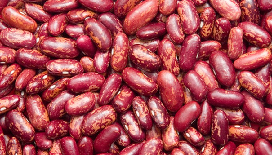 Kidney bean plants produce fruit in around 60 days.