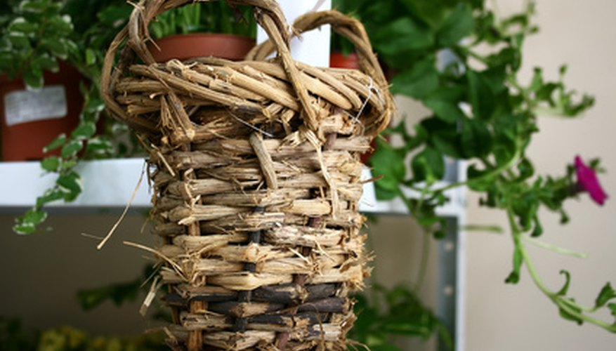 Any basket can be used to create a beautiful container garden.