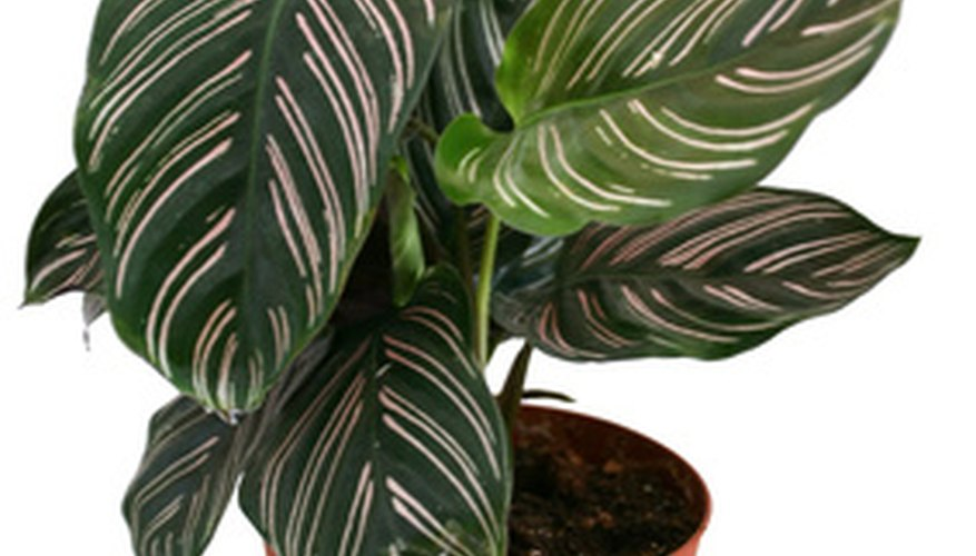 Even indoor potted plants with low light requirements can benefit from a source of artificial light.