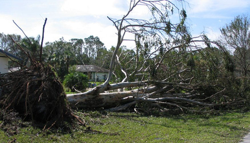 Strong winds can topple even the healthiest of trees.