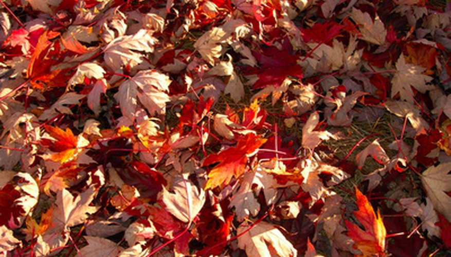 Fallen leaves help acidify soil naturally.
