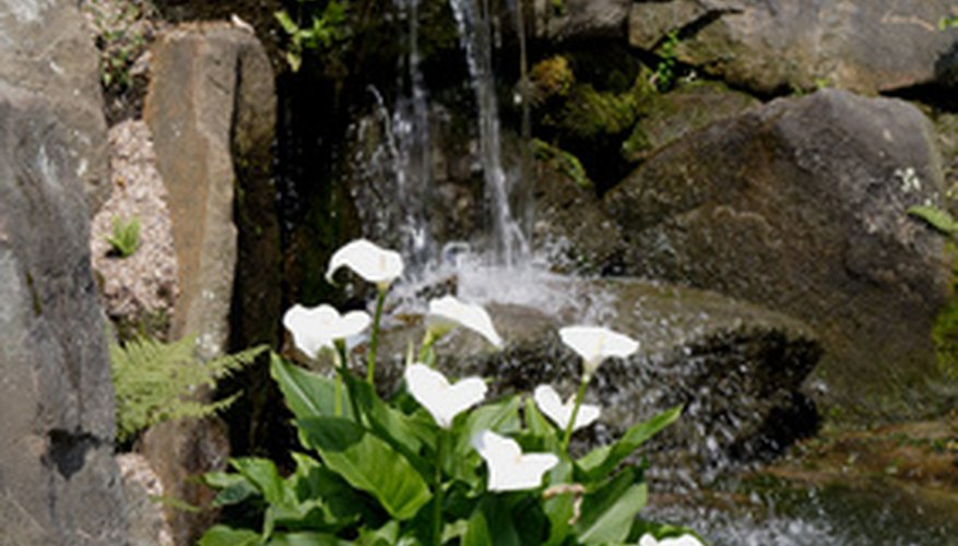 Water features provide continuous moisture.