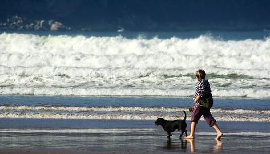 A long walk can help burn off your dog's excess energy.