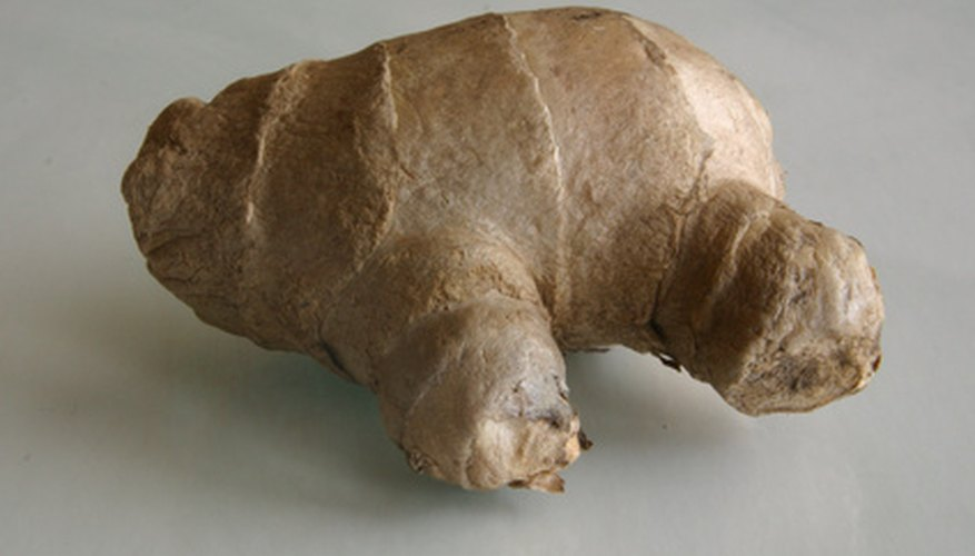 The firm rhizome root of a ginger plant is key to its long perennial life.