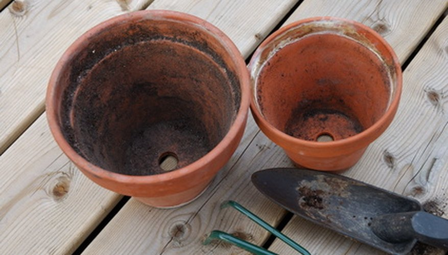 Drainage holes in flower pots aid in soil drainage for geraniums.