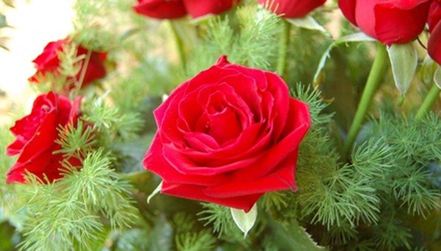 Expresa tu agradecimiento regalando flores a tu actor favorito.