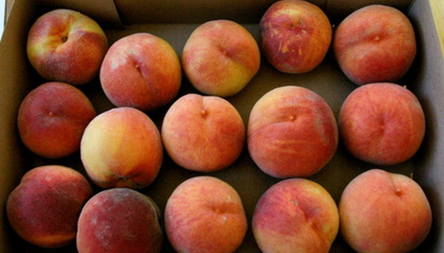 Peaches are some of the most common fruits harvested in the New England region of the United States.