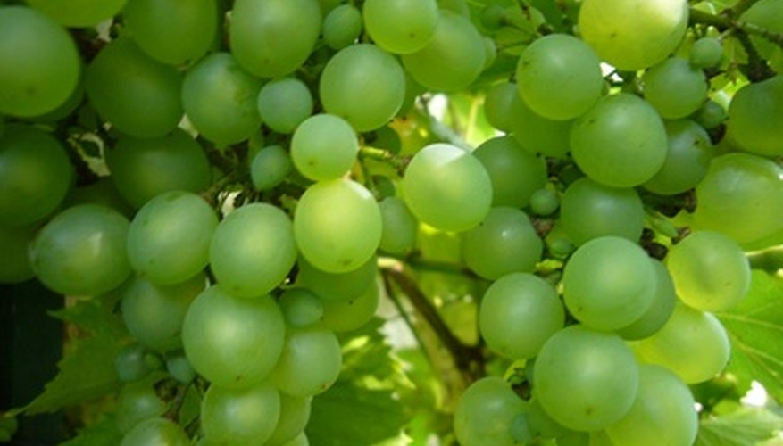 The Niagara grape is a green colored grape.