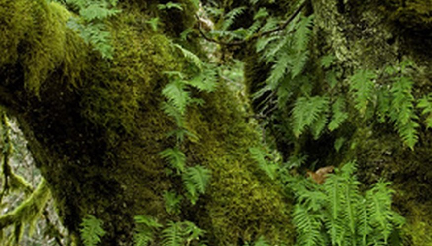 Fern and other ground cover
