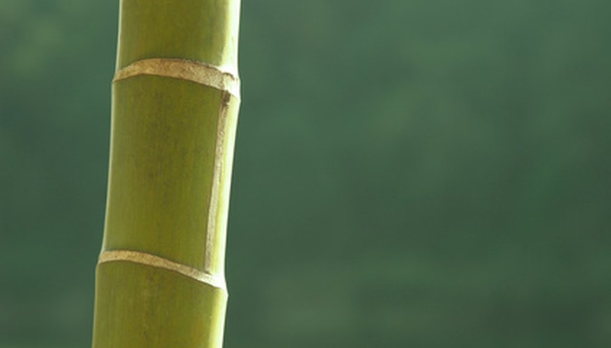 Provide your bamboo with the right conditions.