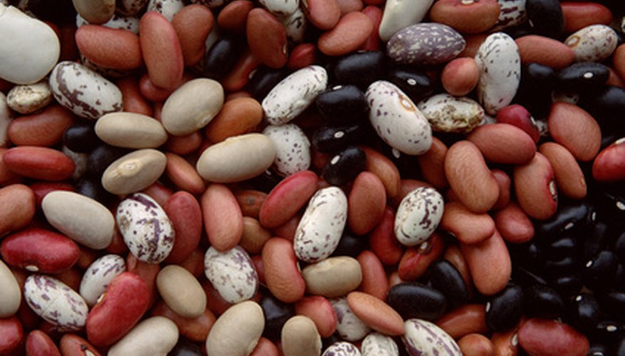 Beans come in many colors.