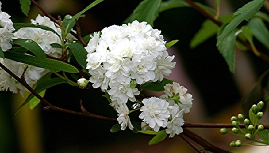 Shade-loving shrubs.