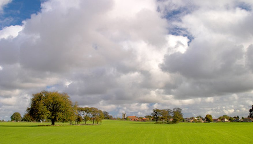 English pastoral landscapes are filled with sweeps of green turf.