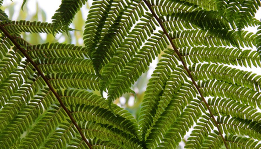 Ferns are shade-loving plants, and some varieties can grow as shrubs.